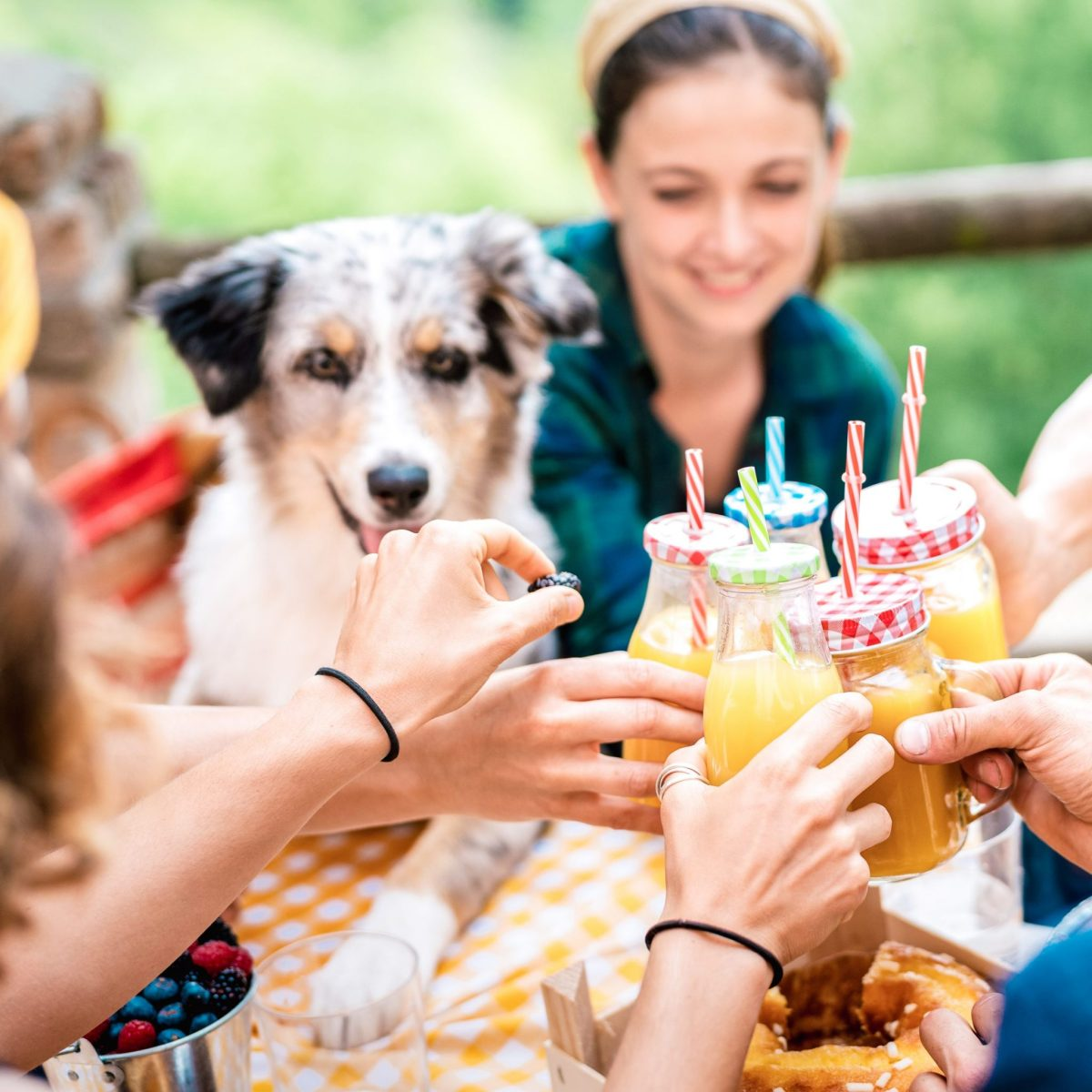 Happy friends toasting healthy orange fruit juice at countryside picnic - Friendship concept with alternative people having fun together with family dog on afternoon relax time - Vivid bright filter